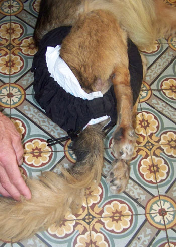 TCHARA a une culotte (4 septembre 2008) Couche12