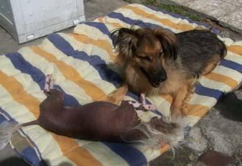 TCHARA joue avec les copains (30 août 2008) Joue-a10