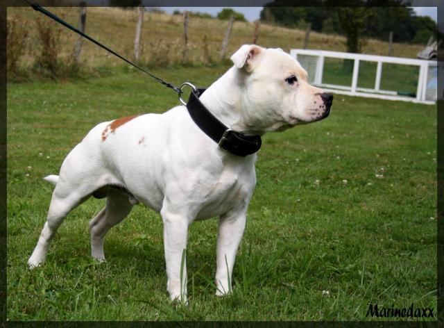 à Adopter chien Brasco - 5 ans [Adopté] 13710