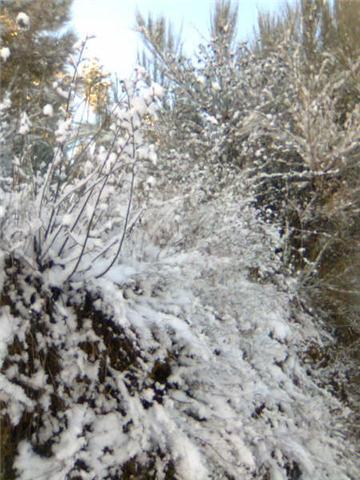 Castedo Branquinho/ Neve Casted11