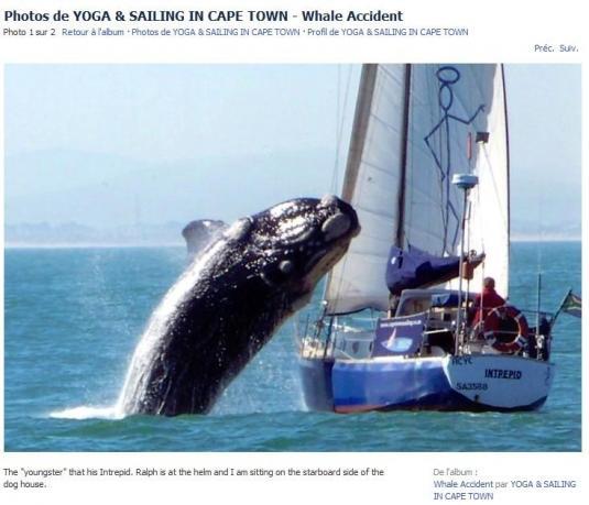 Une baleine attaque un voilier ! H-20-210