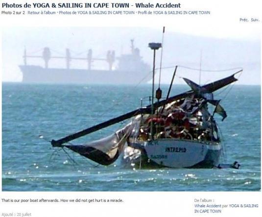 Une baleine attaque un voilier ! H-20-211