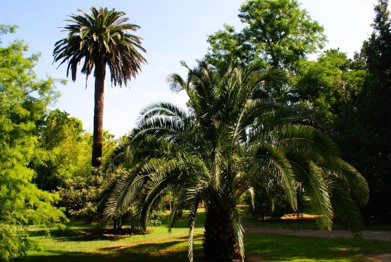 le jardin des plantes de Saint Cyprien Dsc06011