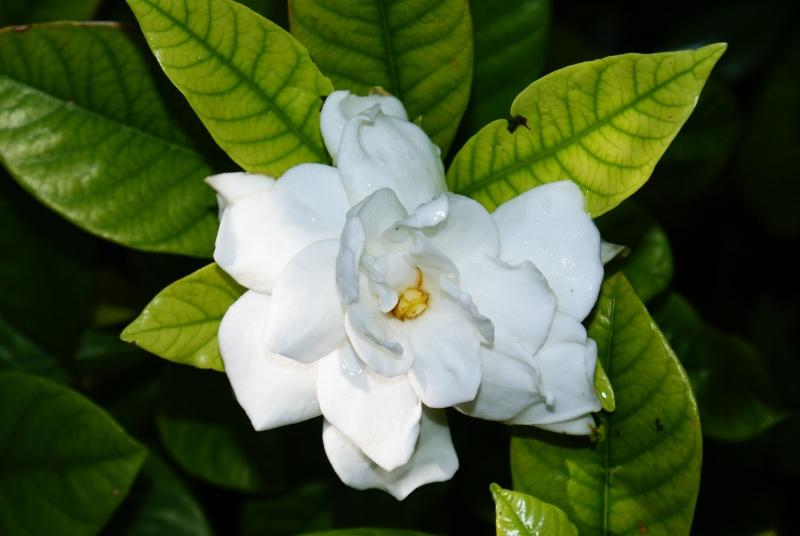 le jardin des plantes de Saint Cyprien Dsc06012