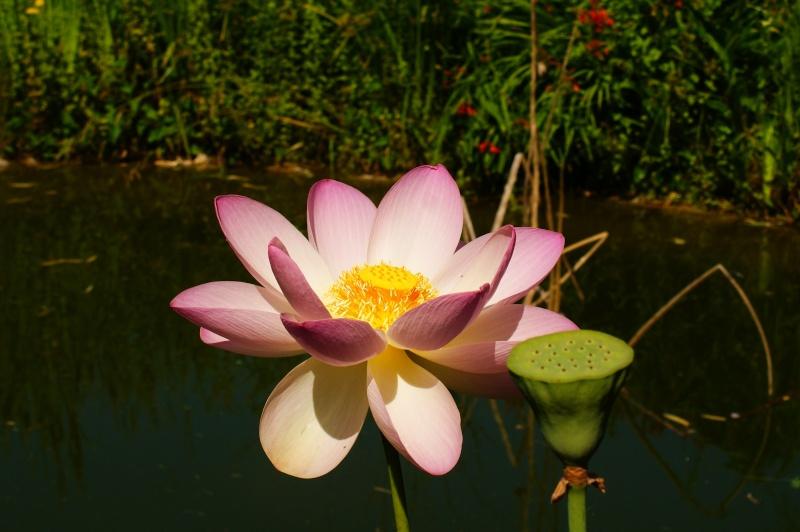 le jardin des plantes de Saint Cyprien Dsc06020