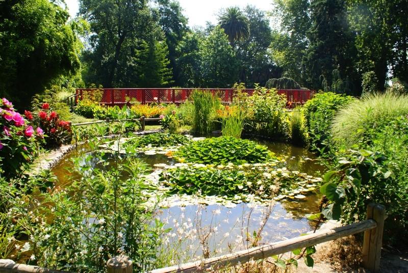 le jardin des plantes de Saint Cyprien Dsc06111