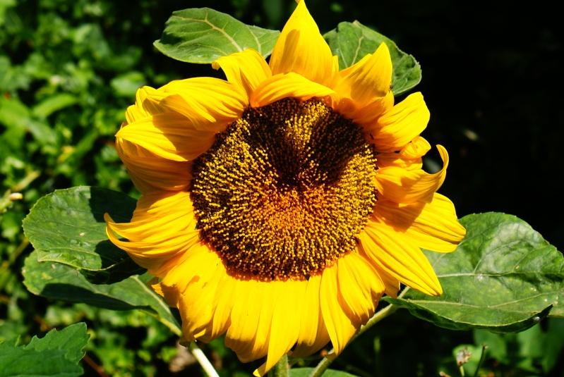 le jardin des plantes de Saint Cyprien Dsc06113