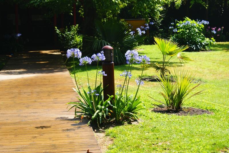 le jardin des plantes de Saint Cyprien Dsc06114