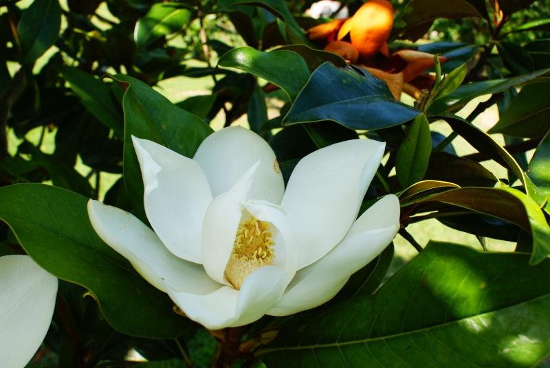 le jardin des plantes de Saint Cyprien Dsc06115