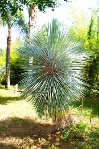 le jardin des plantes de Saint Cyprien Dsc06116