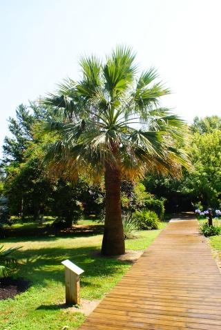 le jardin des plantes de Saint Cyprien Dsc06121