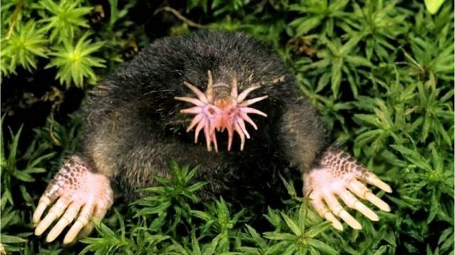 Top 5 des créatures étranges qui vivent sur notre planète Condyl10