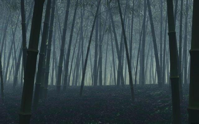 Top 5 des lieux les plus hantés du monde Foret-10