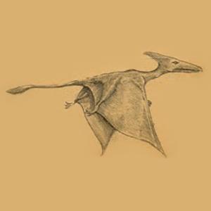 Des ptérodactyles encore vivants? Ropen310