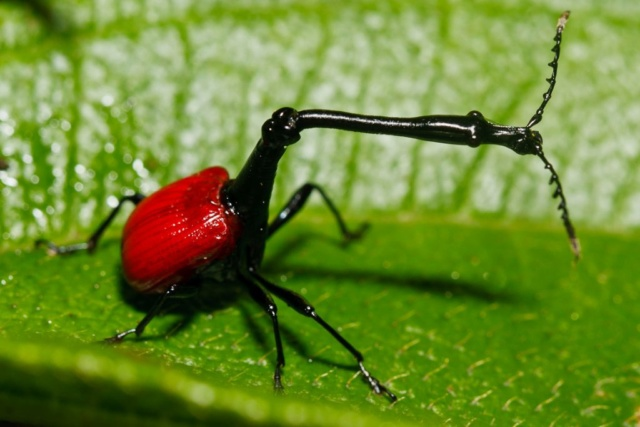 Top 5 des créatures étranges qui vivent sur notre planète Scarab10