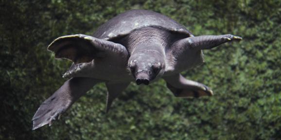 Top 5 des créatures étranges qui vivent sur notre planète Tortue10