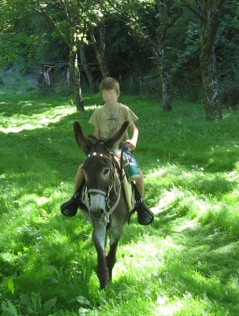 A cheval à la rentrée ! CDTE26 Img_0210