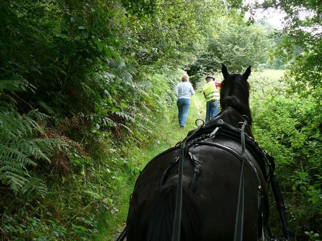 19 aout 2012 Randonnée du Highland à St Riquier es Plains P1320111