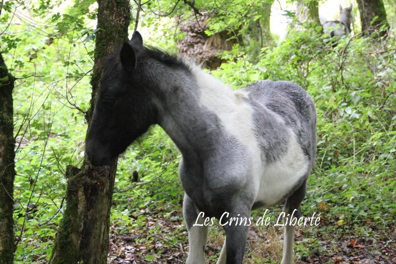 Dpt 15 - Canopée - ONC selle - Sauvée par Lola2107 !!!!!!!( Dec 2012) Canopa11