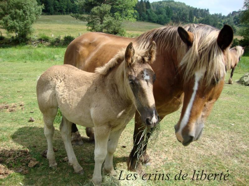 Dpt 48 - Capucine - OC Comtoise - Sauvée par Ann Crowe !! ANGLETERRE (2012) Capuci10