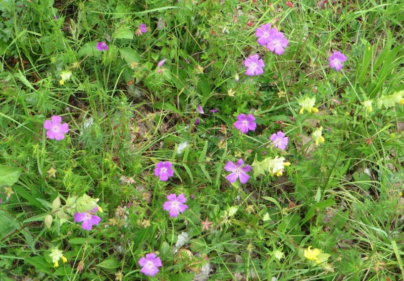 Fleurs au Kaiserstuhl Img_8012