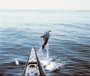 le dolph'ijn....... Dolfij10
