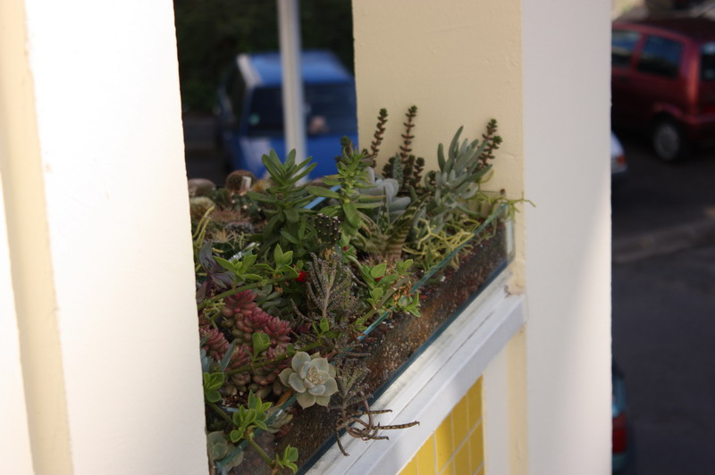 Ma balconnière Img_1032