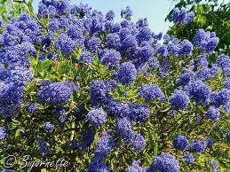 Fleurs du moment Caanot10