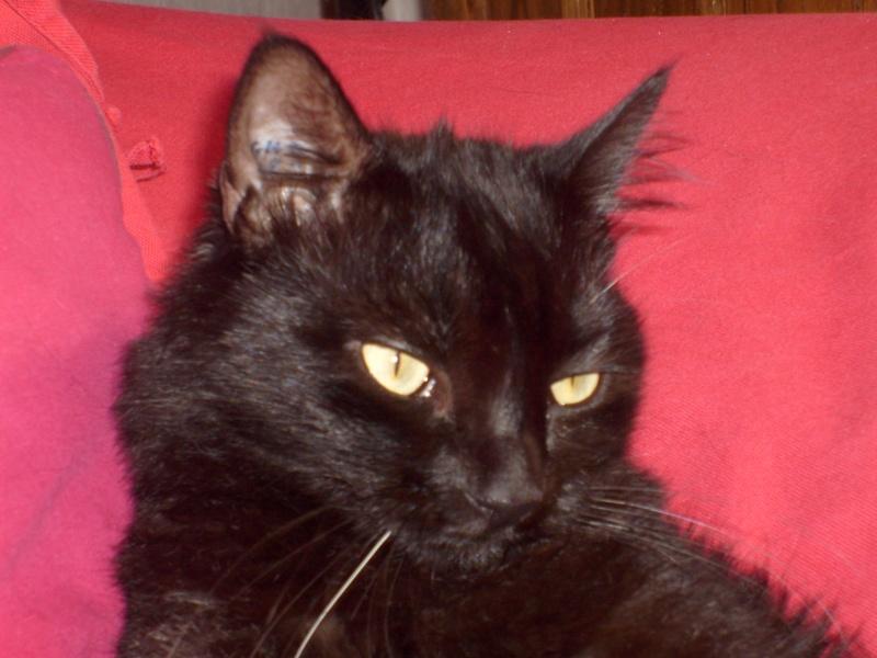 je vous présente mon chat Billy - Page 8 S6300412