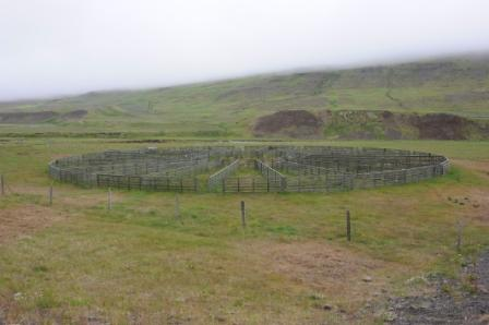 Islandais Bois10