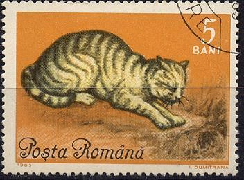 Katzen Sp28-023