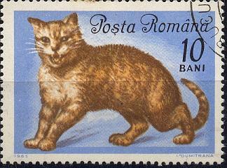 Katzen Sp28-024