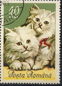 Katzen Sp28-025