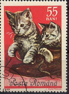 Katzen Sp28-026
