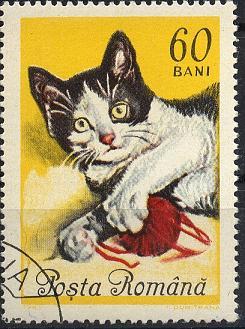 Katzen Sp28-027
