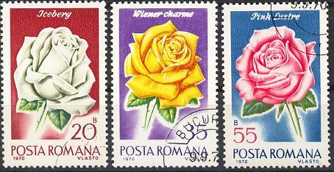 Rosen Sp28-029