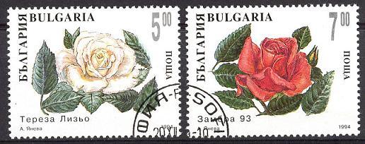 Rosen Sp28-032