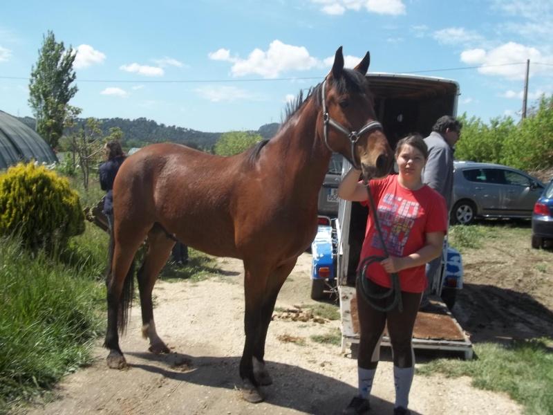 Cheval disparu à Cadenet (84) Cheval10
