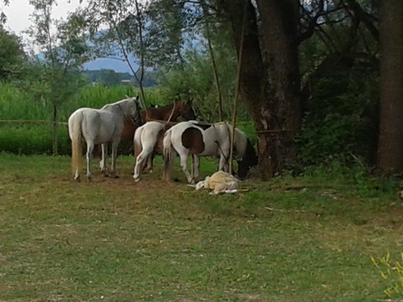 Théâtre à cheval 10441010