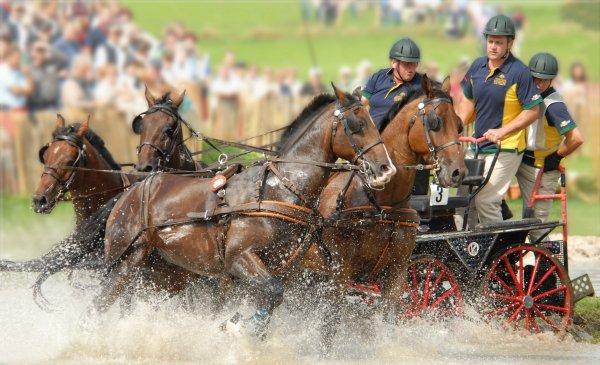 Cleveland Bay Horse Society of Australasia Bobedw10