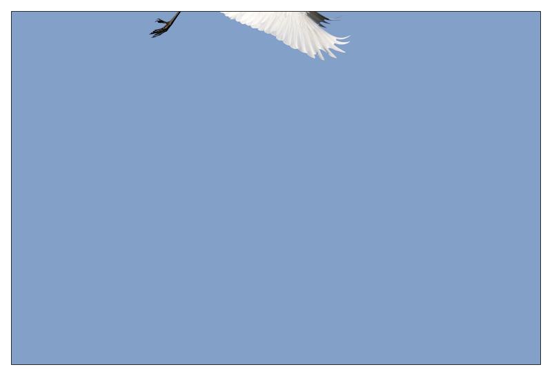 Le poulailler (++++++) - Page 3 030_im10