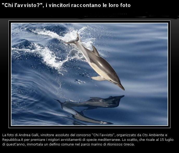 Delfino...................... Delfin10