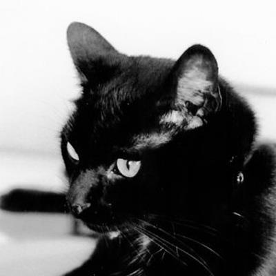 Perdu chat noir à Ézy-sur-Eure Flache10