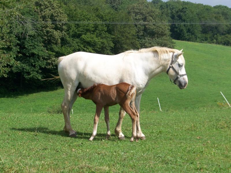 NINA - ONC selle typée Camargue née en 2002, et sa fille ALOE (2010) - adoptées en août 2010 par nine68 - Page 7 00410