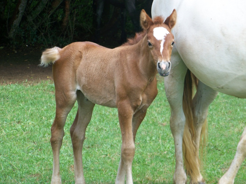 NINA - ONC selle typée Camargue née en 2002, et sa fille ALOE (2010) - adoptées en août 2010 par nine68 - Page 7 01110