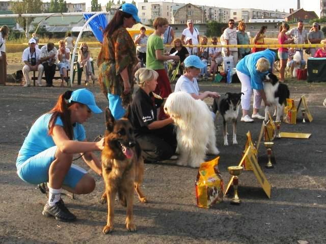 Выставочные успехи наших собак - Страница 2 0c678710