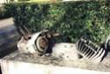 Malaguti Olympique V4 de 1976 2001-m14