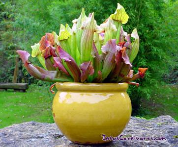 Plantas preferidas.. Sarra10