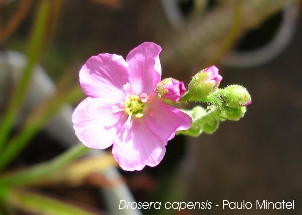 Plantas preferidas.. Vga10