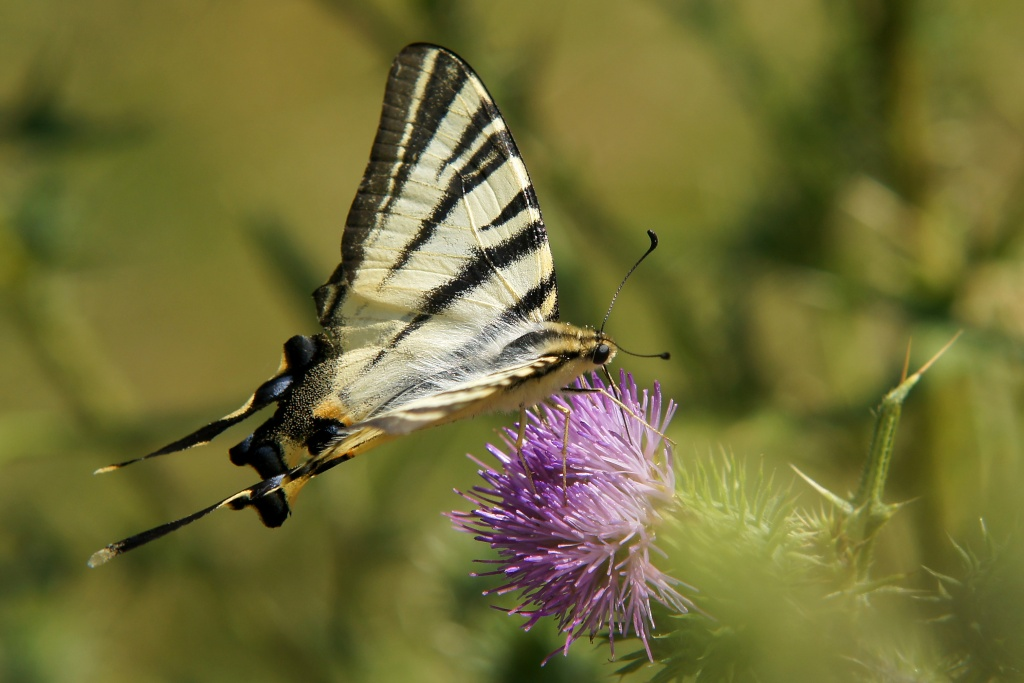 Insectes et papillons - Page 5 Dsc04010
